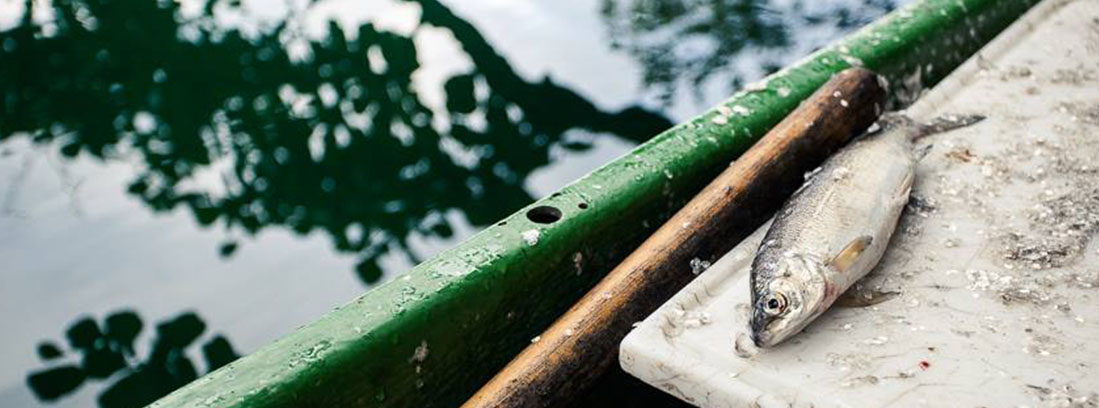 ferienhaus millstaettersee fischerei moser